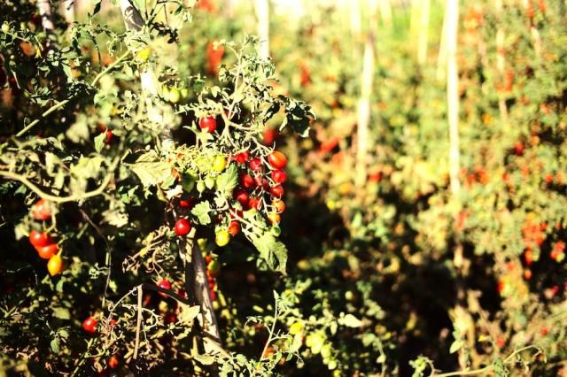 Organic Food Market Limassol