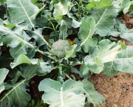 Organic Food Market- Autumn veggies