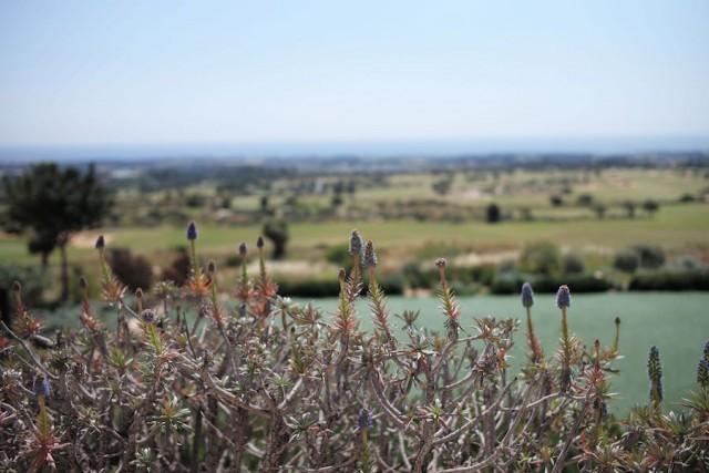 Elea Estate Paphos